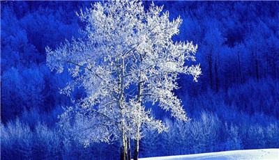 一起来看看关于白杨树的资料吧