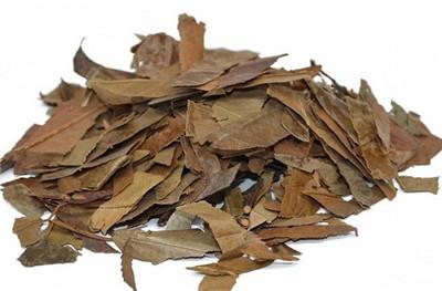 石楠叶,石楠叶的功效与作用
