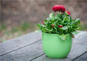 花卉养殖技巧