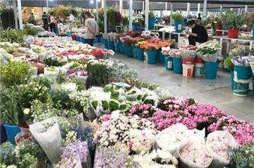北京花卉批发市场