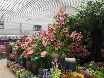 玉泉营花卉市场