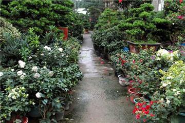 深圳花卉世界