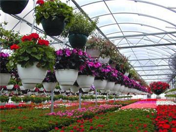花卉栽培技术