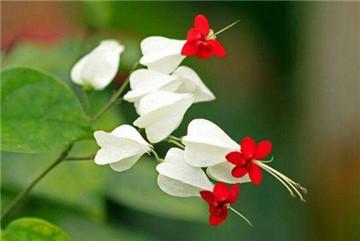 花卉龙吐珠