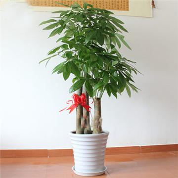 常见室内花卉