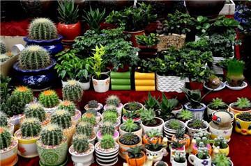 西安花卉市场