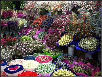 云南花卉市场