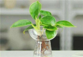 水培花卉玻璃瓶