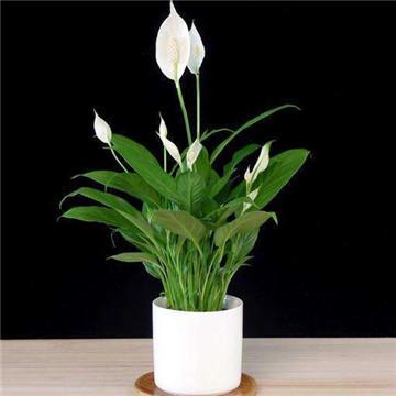 家庭花卉图片