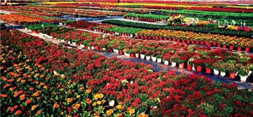 顺德陈村花卉世界