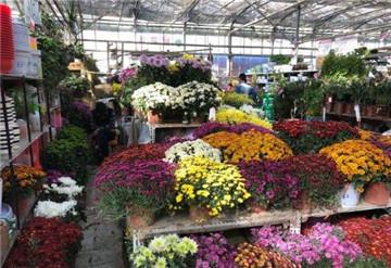 郑州陈寨花卉市场