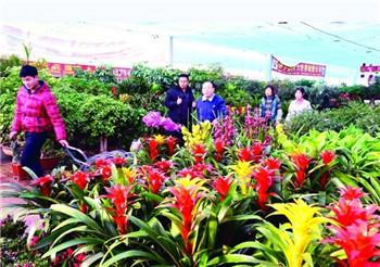 长春花卉市场