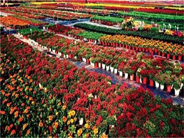 佛山陈村花卉世界