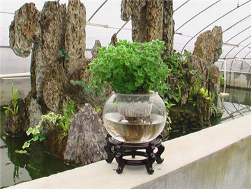 水培花卉技术