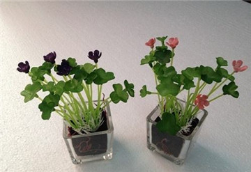 办公室花卉摆放风水
