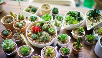 多肉植物种植