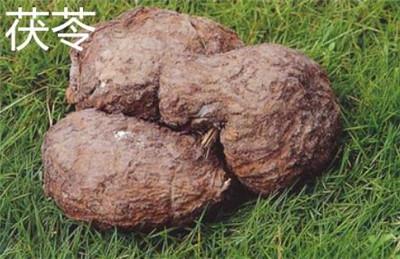 土茯苓和茯苓的区别