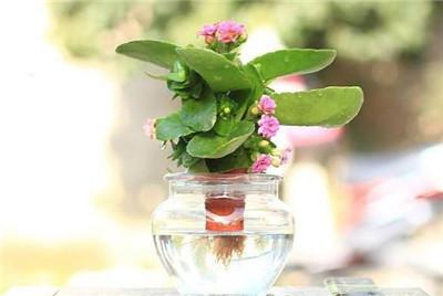 水培花卉名称及图片大全