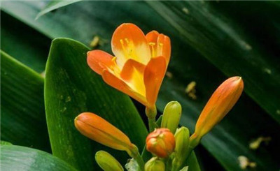 花卉名称大全