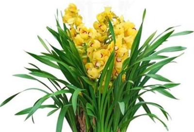 盆栽花卉名称及图片