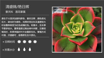 多肉花卉名称以及图片大全