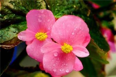 室内花卉名称及图片大全