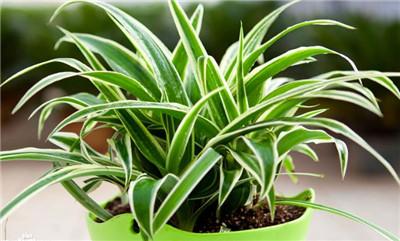 绿植花卉图片及名称
