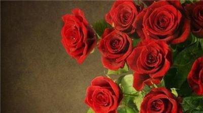 22朵玫瑰花语